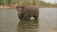 A baby Indian elephant and its mother bathe in a pool.