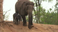 A baby Indian elephant and its mother walk down a dirt slope.