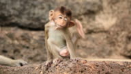 Baby monkey is scratching