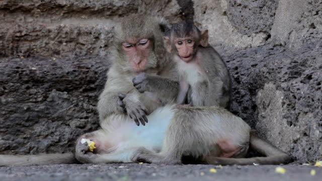 Cuccioli di scimmia nel Tempio Thai, Lopburi, Tailandia