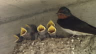 Baby Swallows Asking For Foods