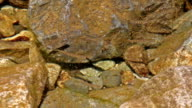 Baby Trout in Freshwater River