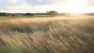 Back Lit Grass Scene