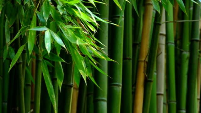 background - bamboo