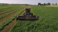 Backwards tracking of tractor harvest, 4K Video of Cornfield and agriculture production like corn, wheat, soybean, sunflowers, and vineyards with tractor, logging