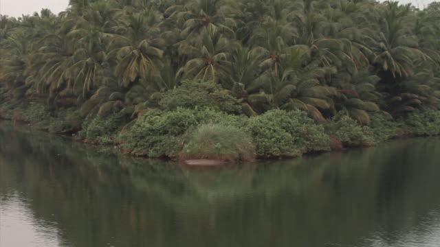 CU, ZO, WS, Backwaters of Kerala, India