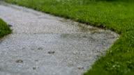 SLO MO Backyard in torrential rain