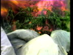 Bags of confiscated marijuana plants burning in field following drugs bust/ Hawaii Islands USA/ AUDIO