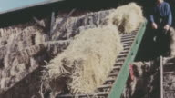 1967 MONTAGE Bales of hay ascending a conveyor belt to a barn while some drop to the ground / United Kingdom