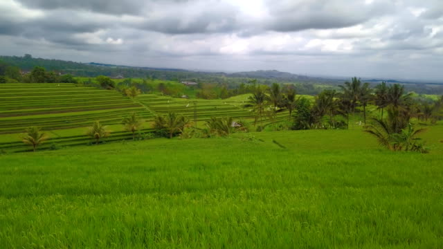Bali Reis Feld Jatiluwih - bewölktem Himmel