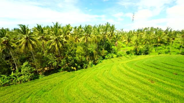 Veduta aerea di campi di riso Bali