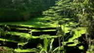 Bali Ubud Indonesia rice paddy