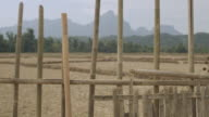 MS PAN SLO MO Bamboo fence pickets with plants intertwined  / Vang Vieng, Vientiane, Laos