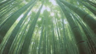 bamboo forest - 4K