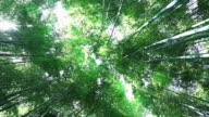 MS Bamboo forest / Arashiyama, Kyoto, Japan