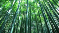 MS TU Bamboo forest / Arashiyama, Kyoto, Japan