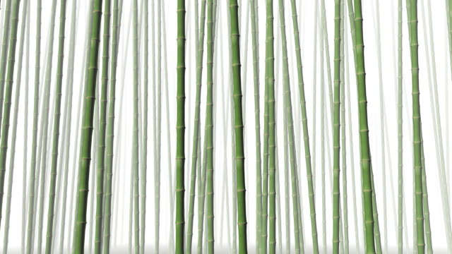 Bamboo forest in the wind (loopable)