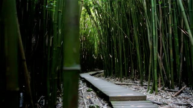 Bamboo Forest Panning, Maui, Hawaii