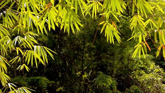 bamboo leaf arch