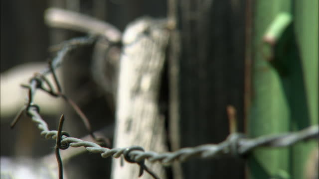 CU R/F Barbed wire and old wooden post / Stevensville, Montana, USA