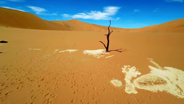 HELI Bare Tree At The Dead Vlei