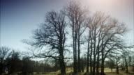 Bare trees against the sky, Sweden.