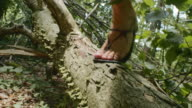 SLO MO Barefoot runner jumping over a log in the forest