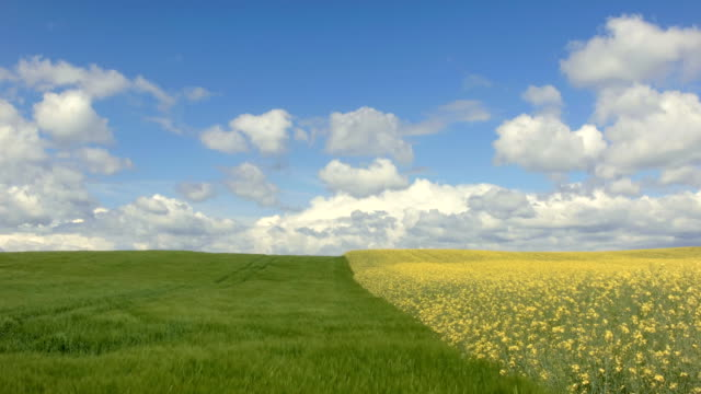 Barley and Oilseed Rape Field