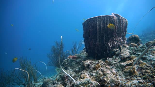 Barrel sponge (Xestospongia testudinaria), whip coral (Junceella) and Sea fan coral (Gorgonian).  Distressed Coral Reef Bleaching on Damaged Fragile Ecosystem Ocean Environment.  Koh Haa, Krabi, Thailand.