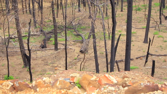 Barren Forest, Broken And Burnt Trees