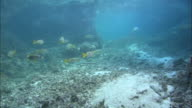 Base of coral islets, Aldabra, Indian Ocean
