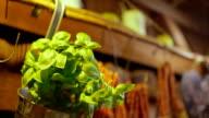 Basilikum-Pflanze In metallischen Behälter