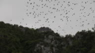 Bats flying over the mountain.