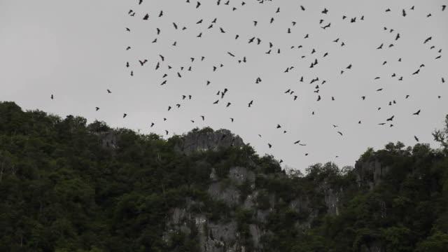 Fledermäuse fliegen über den Berg.