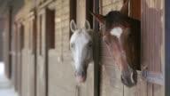 LD Bay und Weißes Pferd schaut aus dem stable