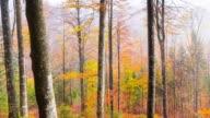 Beach forest in autumn