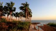 Alberi di palme sulla spiaggia