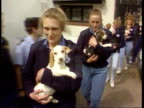 Beagles rescued from farm ENGLAND Glos Malvern Perrycroft Farm Kennels MS RSPCA assistants carrying rescued beagles towards MS Beagles in pen
