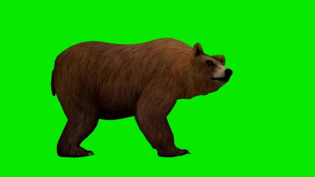 Orso attacco schermo verde (ad anello
