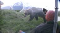 A bear investigates a dummy outside a bear box.