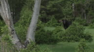 Bear sits in forest