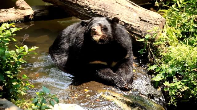 Bears Buffalo.