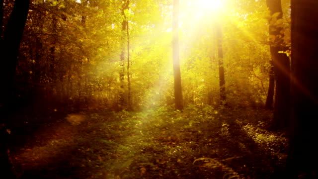 Splendida foresta magica e loop