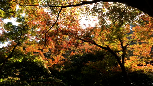 Beautiful Autumn color in the park