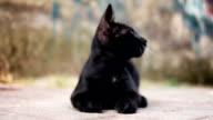 Beautiful black stray cat