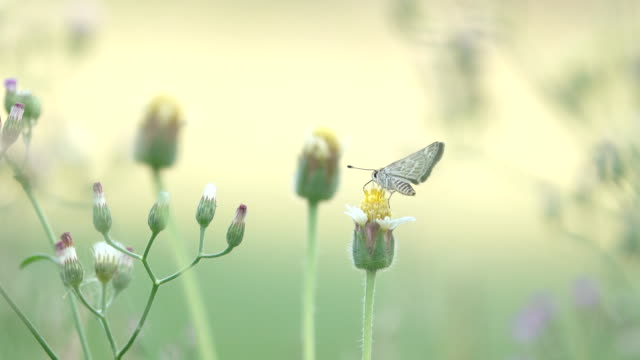 Schöner Schmetterling absorbieren etwas Süßes aus Blumen.