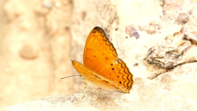 Wunderschönen Schmetterling