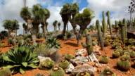 Beautiful Cactus Countryside