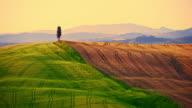 Beautiful candid wheat fields In Tuscany