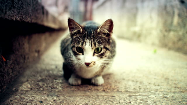 Beautiful cat from Istanbul streets